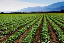 آب شیرین کن کشاورزی-رایمون