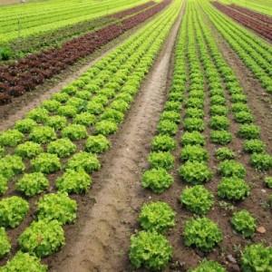 تصفیه آب کشاورزی - رایمون